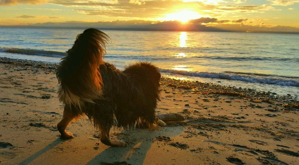 dog on the shoreline of the beach